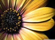 joomla-webstranka-navod-galeriaH